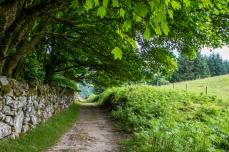 Lough Dan - Ross Mahon Photography (3)