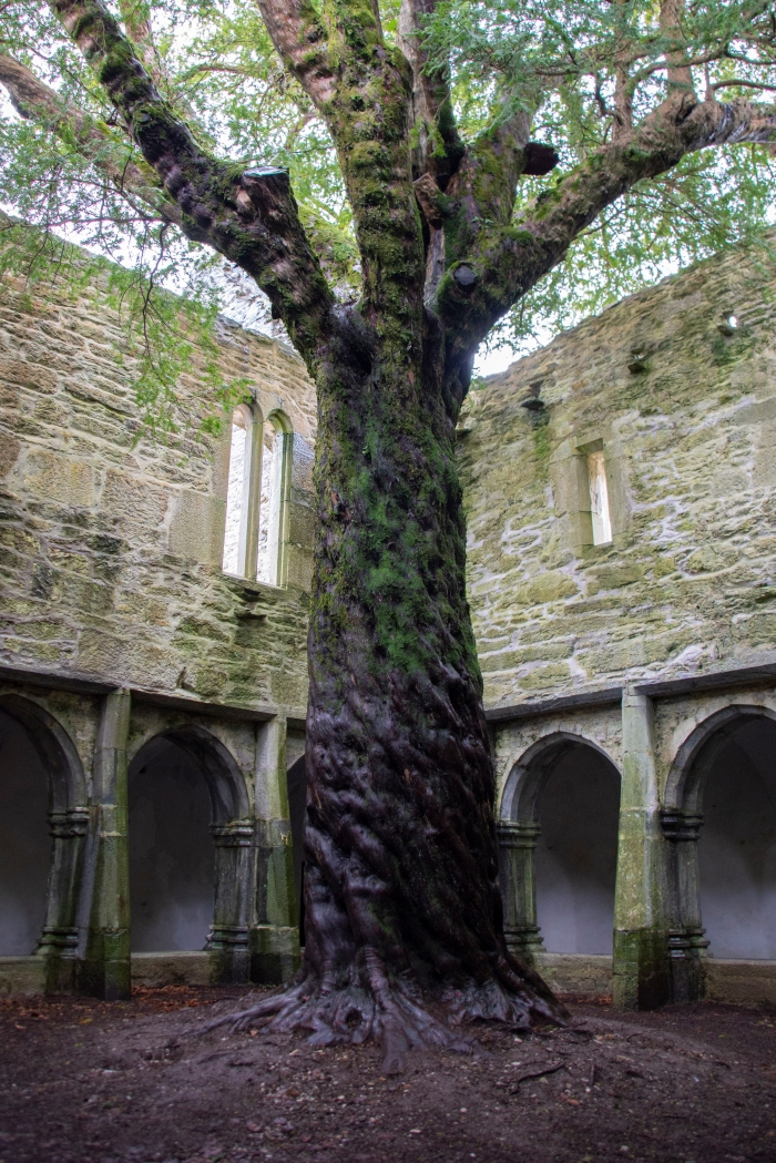 Muckross Abbey - Ross Mahon Photography